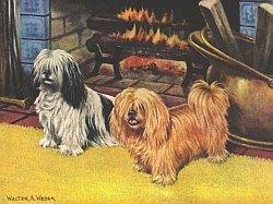 собаки для дома