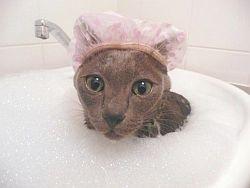 Шампунь для кошек