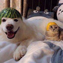 Содержание собаки и кошки в доме