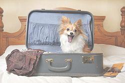 Переезд с собакой