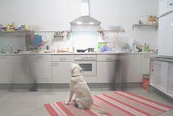 собака на кухне сидяка
