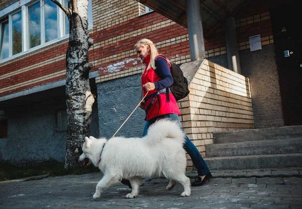 Домашняя передержка собак в Санкт-Петербурге