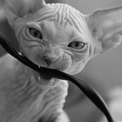 коту по зубам любая электропроводка