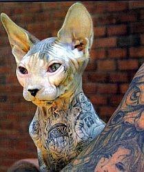татуированный кот