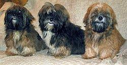 первые прививки щенкам