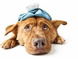 Как ухаживать за больной собакой