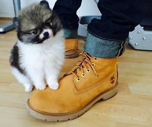собака и зимняя обувь