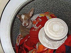 не засовывайте собак в стиральную машину